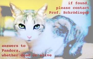 """schrödinger's cat, pandora's box"" image by OneLittleFishie"